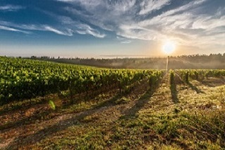 Encouraging scheme for wine production sector